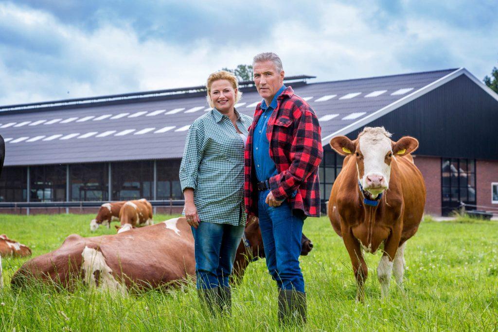 Koeien boer